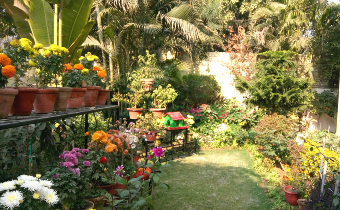 Benefits Of House Plants